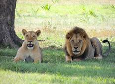 Jewels of Africa with Nairobi & Kruger National Park Area Tour