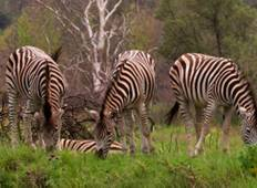 Jewels of Africa with Lake Nakuru National Park Area & Kruger National Park Area Tour