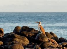 Cruising the Galápagos on board the Coral I/II – 7-Night cruise Tour