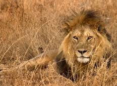 East Africa Private Safari Tour