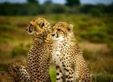 East Africa Private Safari with Ol Pejeta Conservancy & Lake Nakuru National Park Area Tour