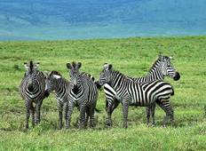 East Africa Private Safari with Nairobi, Ol Pejeta Conservancy & Lake Nakuru National Park Area Tour