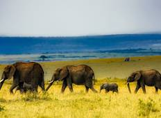 East Africa Private Safari with Nairobi & Serengeti Extended Stay Tour