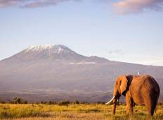 Kenya Private Safari with Amboseli National Park Area Tour