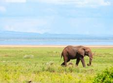 Tanzania Private Safari with Selous Game Reserve Tour