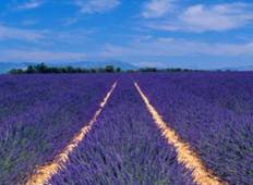 Burgundy & Provence – Cruise Only Northbound Tour