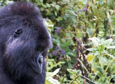 Game Parks and Gorillas Accommodated Tour