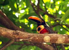 Costa Rica for Birdwatchers Tour