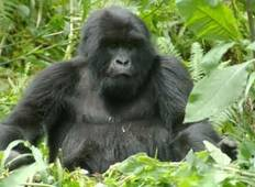 Nairobi To Nairobi (19 Days) Gorillas & Gameparks Tour