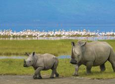 Essential African Safari Tour