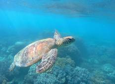 Marine Conservation on the Great Barrier Reef - Program for Certified Divers Tour