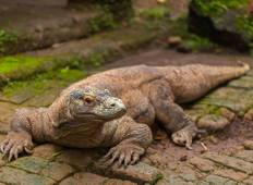 Komodo & Flores Adventure  Tour