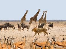 Wonders of Namibia National Geographic Journeys Tour