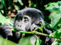 Troop to the Gorillas Accommodated 6 Days Tour