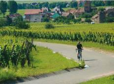 Rhine Valley Cycle Tour