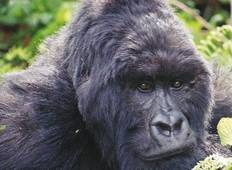 Primates and Wildlife of Uganda Tour