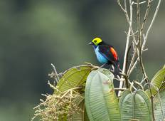 4 Day Manu Bird Watchers Paradise - Group Service Tour