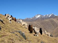 7 Day Lares Trek to Machu Picchu -  Group Service Tour