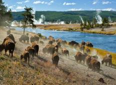 Yellowstone Wildlife Trails Tour