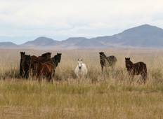 Wild Mongolia and Golden Eagle Festival Tour