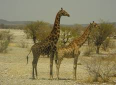 3 Day Etosha Accommodated Tour