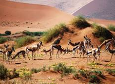 3 day Sossusvlei Accommodated Tour