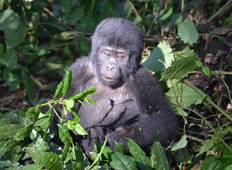 Ocean to Gorillas Accommodated 26 Days Tour
