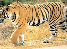 Rajasthan Wildlife Safari Tour Tour