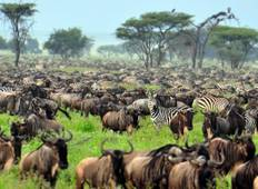 Kenya & Tanzania Trails - 13 days Tour