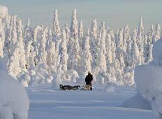 Dogsledding in Oulanka National Park Tour