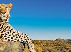 Ultimate Africa (from Cape Town to Johannesburg) Tour