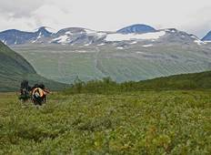 Wildlife expedition in Sarek National Park, Lapland Tour