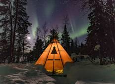 New Years special - Northern Lights & wildlife Tour