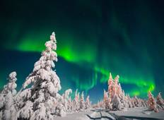 Northern Lights, Moose, Reindeer and dogsledding at mountain lodge in Wild Lapland Tour