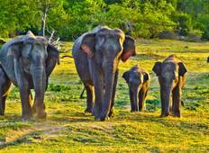 Safari in Sri Lanka - 9 days Tour