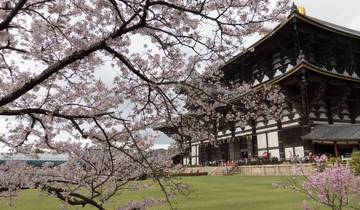 10 Days Japan Cherry Blossom Tour | Anime & Hiroshima - Beautiful Japan Tour