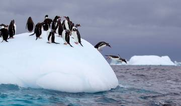 Christmas in Antarctica - Family Departure Tour