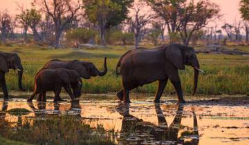 14 Days Okavango Delta, Victoria Falls & Zimbabwe Serviced Camping / PLUS Tour