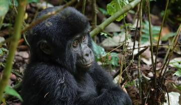 Game Parks and Gorillas 28 Days Tour