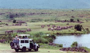 The Classic Safari Tour