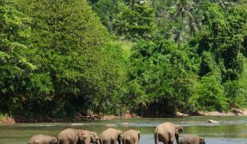 Sri Lanka by Bike Tour