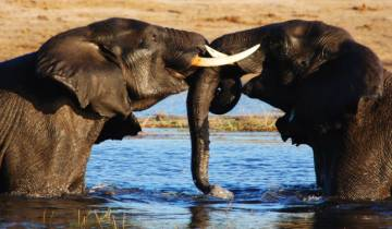 Kruger to Vic Falls Tour