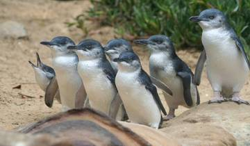 1 Day Phillip Island Penguin Parade & Wildlife Adventure Tour Tour