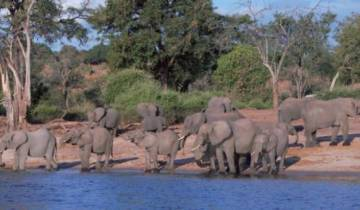 Best of Botswana Tour