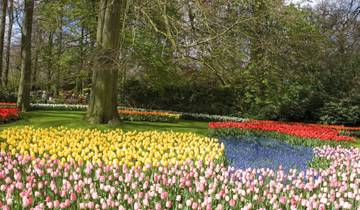 Springtime in Holland Tour