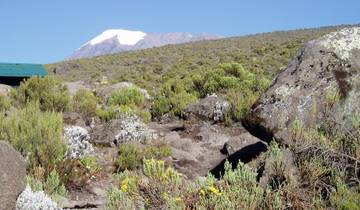 Kilimanjaro Trek - Machame Route - Moshi Start Tour