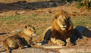 7 Day Kruger, Swazi & Beach Tour
