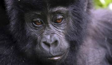 Chimps & Gorillas of Uganda Tour