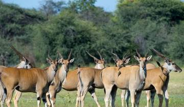 African Insight Safari 7D/6N (from Livingstone) Tour