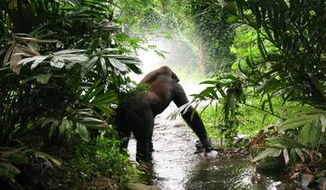 Game Parks and Gorillas Accommodated 28 Days Tour